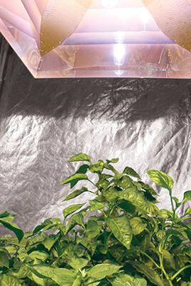 Single Large Reflector Inside Tent